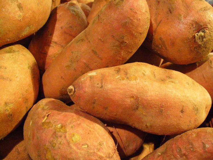 Экзотический сладкий картофель - батат. Особенности выращивания на Урале и в Сибири и полезные советы