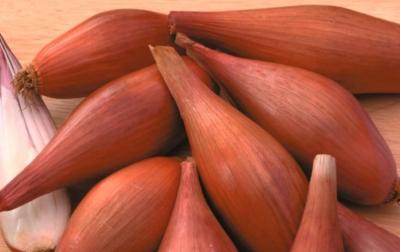 Отличительные особенности лука сорокозубки. Подробная характеристика и правила выращивания