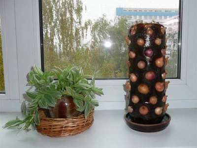 Как вырастить зеленый лук дома в пластиковой бутылке? Правила подготовки тары, посадки и выращивания