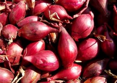 Описание, характеристика и особенности выращивания лука сорта Розанна