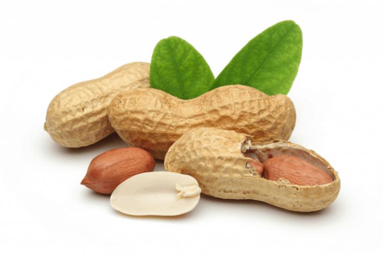 Где и как растет арахис? Все о развитии, цветении и плодоношении земляного ореха