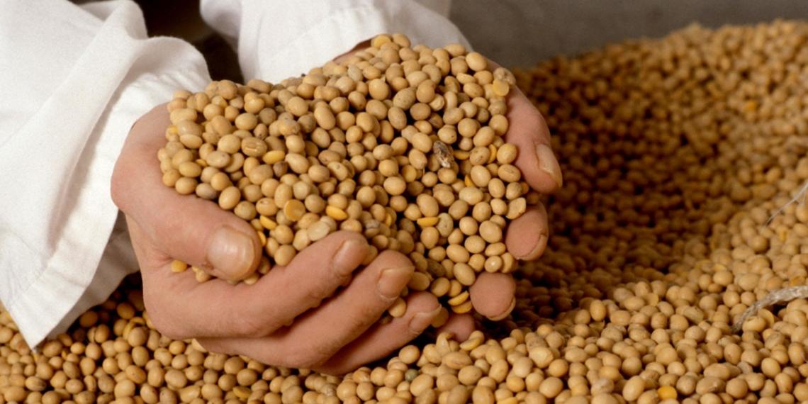 Более 2300 тонн зерна сои из Курской области оказались заражёнными повиликой