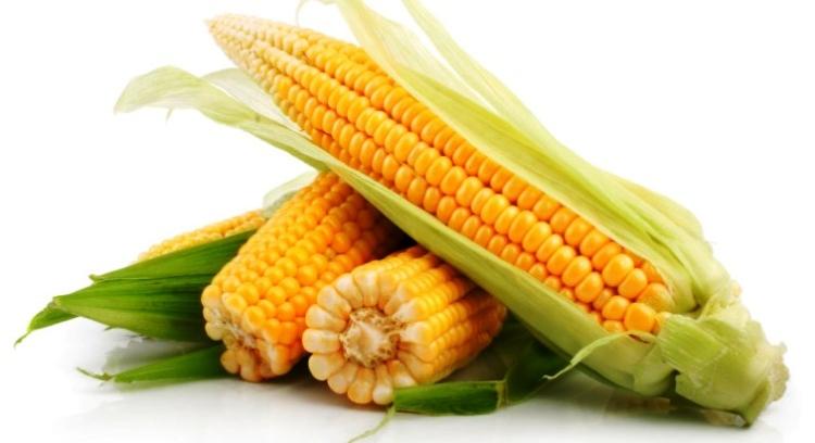надо ли садить кукурузу на рассаду