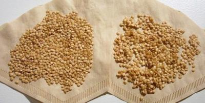 Огороднику на заметку: через сколько дней всходят семена баклажанов после посадки, как повысить всхожесть?