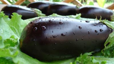 Практические рекомендации, когда и как сажать баклажаны на рассаду