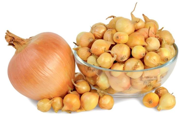 Репчатый лук для Подмосковья. Лучшие сорта для выращивания из севка или семян в открытом грунте