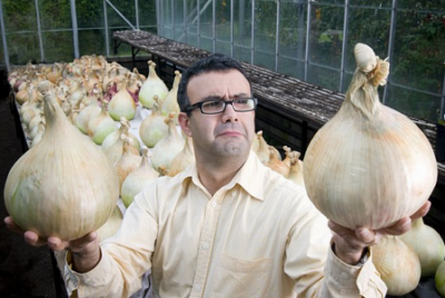 Гигантский сорт репчатого лука Русский размер. Выращивание из семян и через рассаду